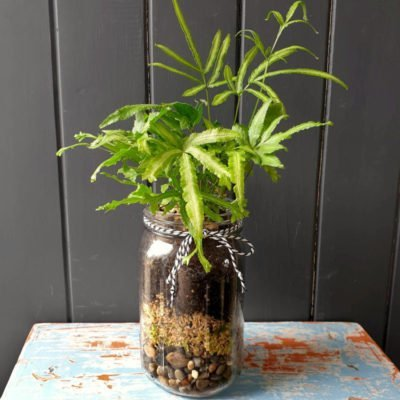 jam jar terrariums houseplant