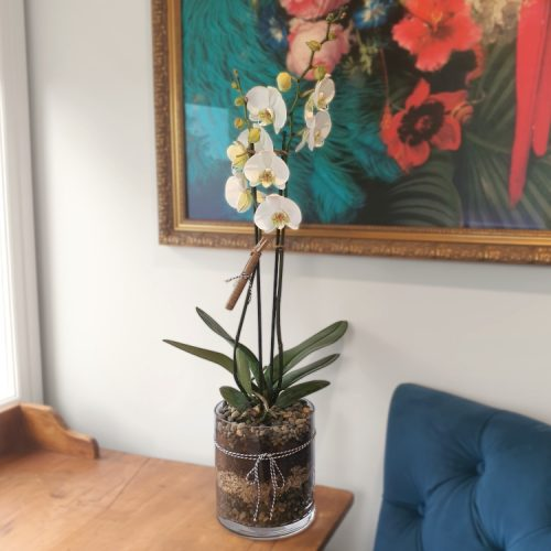 large orchid cylinder
